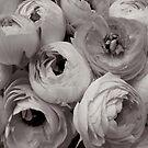 Mad about ranunculas by Barbara Wyeth