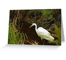 White Heron Looking For Lunch Greeting Card