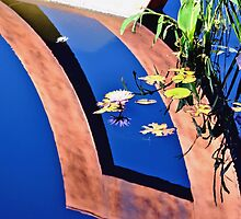Water Lily Reflection Pool by Amy McDaniel