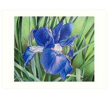 Iris in the wind Art Print