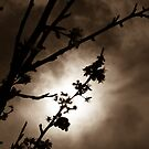 Sepia Silhouette Of Spring by Jessica Hardin