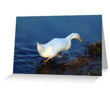 A White Duck Just Taking A Walk Greeting Card