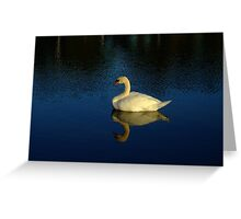 A Beautiful White Swan Reflection Greeting Card