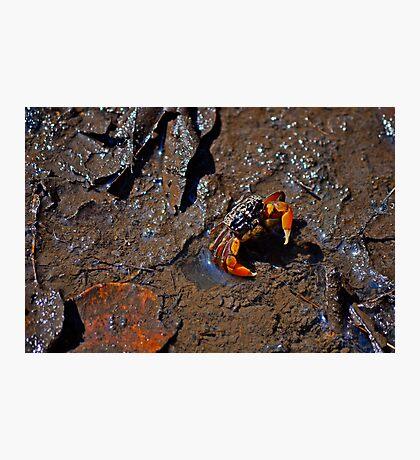 Mud Dweller Photographic Print