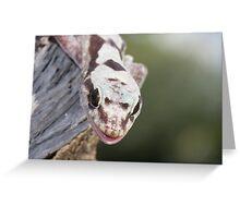 Smiley - Robust Velvet Gecko #2 Greeting Card