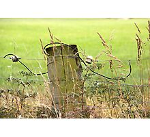 Electric Fence Post in Pasture Green Photographic Print