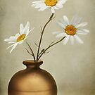 Ox-eye Daisies by Mandy Disher