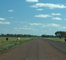 Cattle Paddock No Fences © by Vicki Ferrari