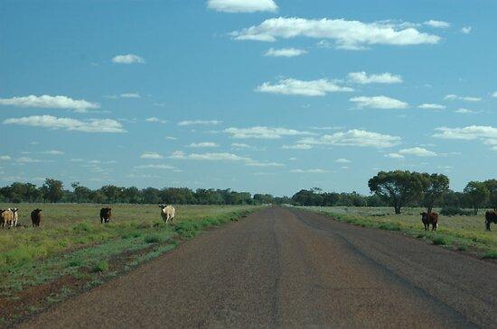 Cattle Paddock No Fences © by Vicki Ferrari