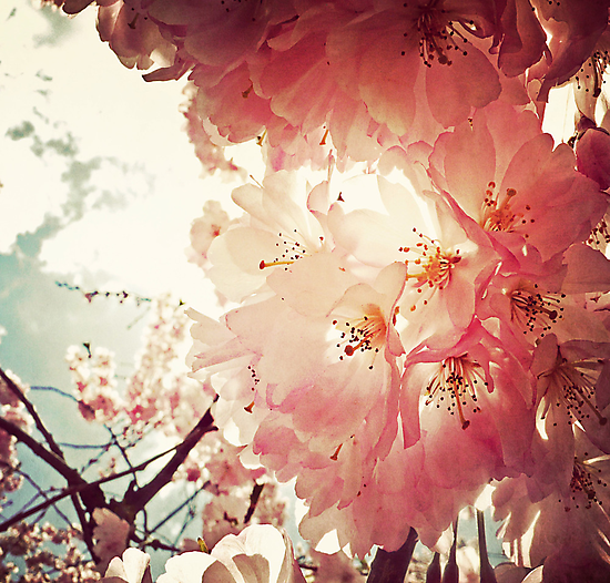 _ spring has sprung _ by Louise LeGresley