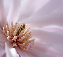 Magnolia by Margaret Barry