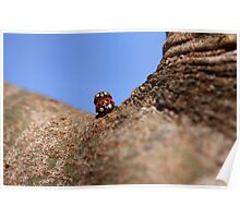 Double decker ladybugs Poster