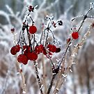 Iced Berries by Brian Gaynor