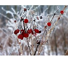 Iced Berries Photographic Print