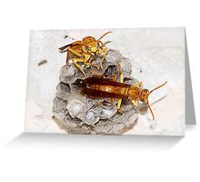A sting operation. Greeting Card