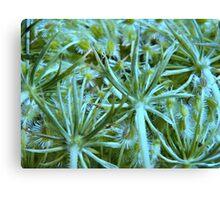 Nature's intricate design Canvas Print