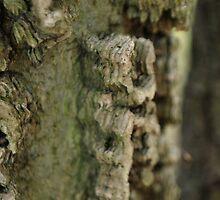bark glyphs  by Jeff Stroud