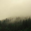 Fog in the forest 2 by Nicoras Calin