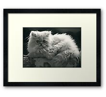 Seriously Sweet Framed Print