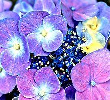 Summer Purple Flowers by Amy McDaniel