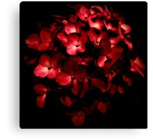 Red Flowers Bouquet in Black Background Photography Canvas Print