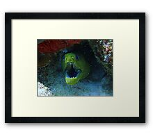 Green Moray Framed Print
