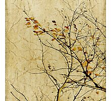 Nature Floral Print Collage in Warm Tones Photographic Print