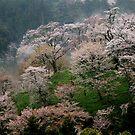 Spring  Mt, Yoshino  ,  JAPAN by yoshiaki nagashima