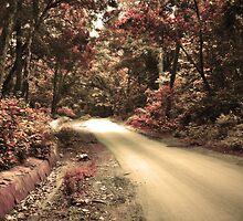 through Jim Corbett wild reserve by rickvohra