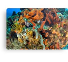Coral, Marine Life Metal Print