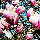 Magnolia Tree Closeup by Susan Savad