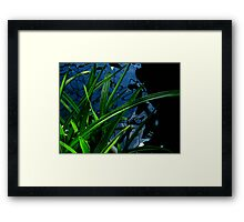 Abstract - Plant, Water and Light Framed Print