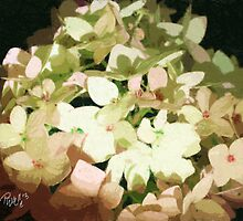 Hydrangeas by JimPavelle