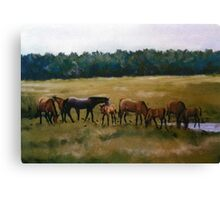 Mares and Foals Horse Pastel Painting Canvas Print