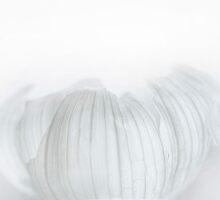 Onion Skin by Gisele Bedard