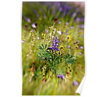 Spring Flowers in Cuyama Valley Poster