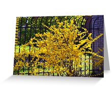 Wispy branches of Forsythia's climbing the fence...... Greeting Card