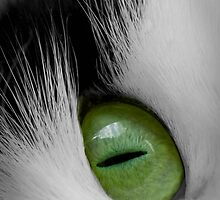 Cats Eye by geoff curtis