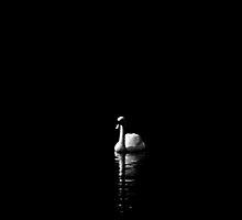 Lone Swan by Kerensa Davies