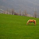 Val Tidone, Italy by jimmylu