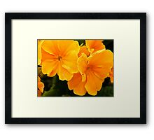 Flowers 4 Framed Print