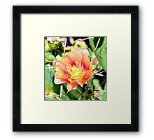 Cactus Flower Bloom Framed Print