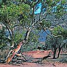Murchison River Kalbarri WA by robert murray