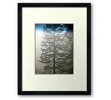 Redwood In The Fog Framed Print