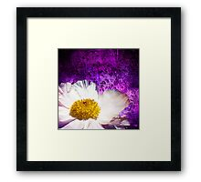 White Peony On Purple Concrete Grunge Background  Framed Print