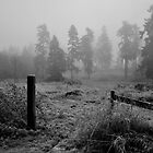 Entering Silence by Rebecca Lefferts