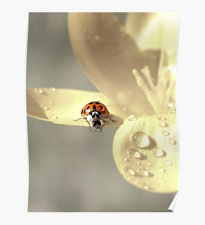 Good Morning Little Ladybug Poster