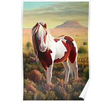 """Southwest Wild Paint Pony"" Poster"