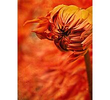 Fanning the flames Photographic Print