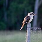 Kookaburra by Deborah McGrath
